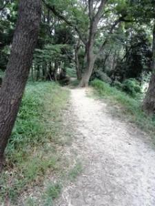 ▲方墳から円墳を縦に臨むと、木々と道が